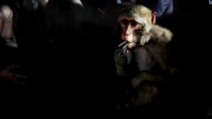 Far Cry 4 Monkey